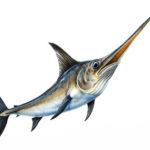 Pesce Spada del Mediterraneo